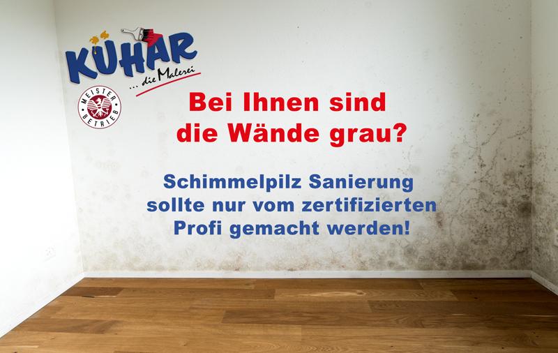 Schimmelpilz Sanierung Malermeister Kühar